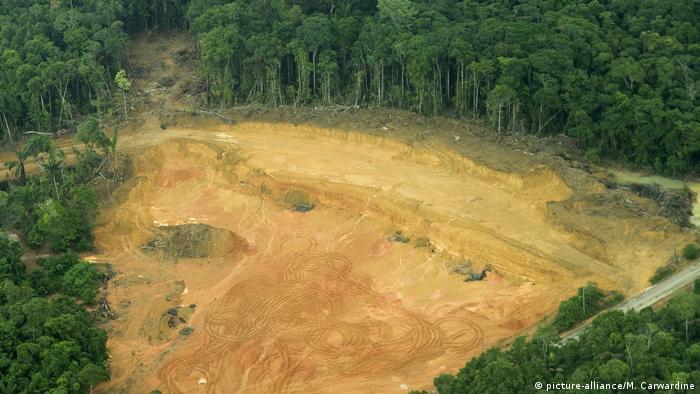 Amazon Ormanları - Brezilya