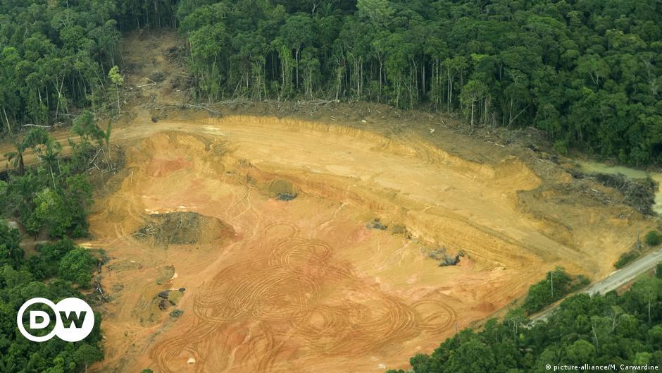 Rekord-Kahlschlag am Amazonas
