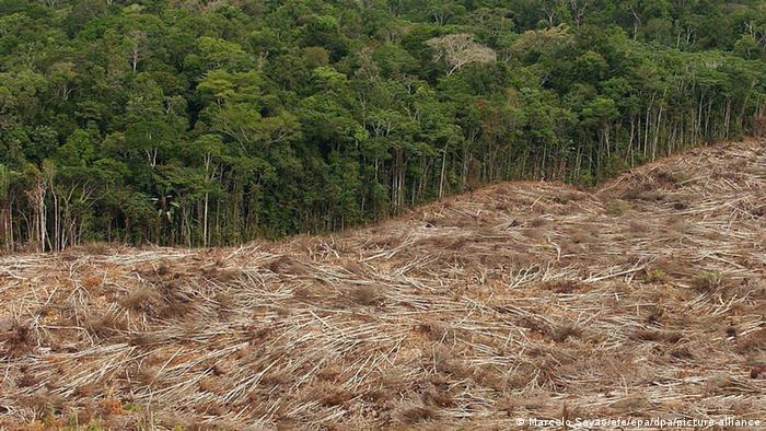 Винищення тропічного лісу у Бразилії