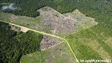 Symbolbild - Rodung - Abholzung - Brasilien- Amazonasgebiet