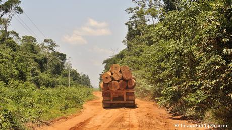 Caminhão leva madeira retirada da floresta
