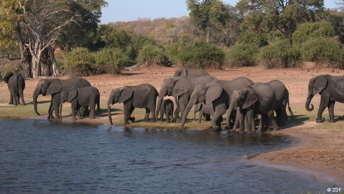 Elephants gather around a water hole in Botswana