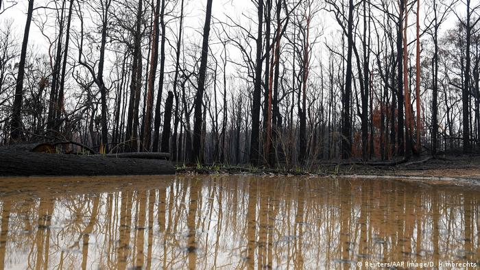 Burned trees in Australia's Blue Mountains, rain forms a pool in front of the trees