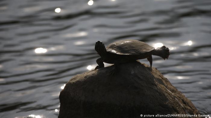 Nepal Schildkröten l Taudha-Feuchtgebiete bei Kathmandu