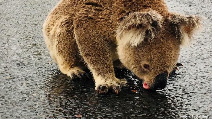 Australien Wetter Überflutung Regen Buschfeuer (Reuters/Social Media)