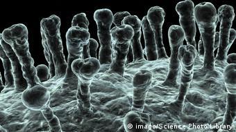 Шипы на поверхности коронавируса - под электронным микроскопом