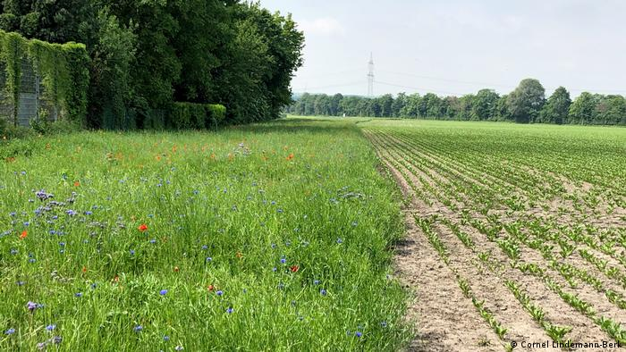 A strip of wildflowers next to a cultivated field