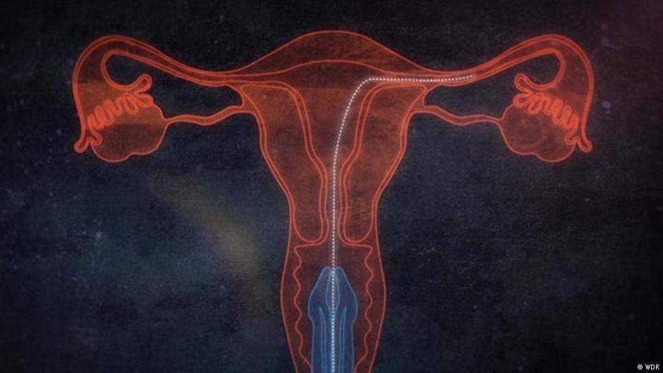 Der Wettlauf der Spermien um die Befruchtung | Projekt