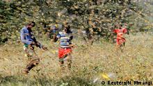 Samburu men attempt to fend-off a swarm of desert locusts flying over a grazing land in Lemasulani village, Samburu County, Kenya January 17, 2020. REUTERS/Njeri Mwangi