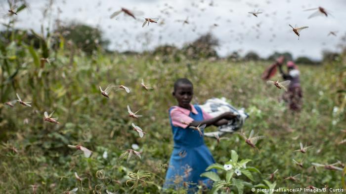 Global Ideas Kenia Heuschreckenplage