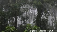 Nicaragua Dschungel Wälder Bäume