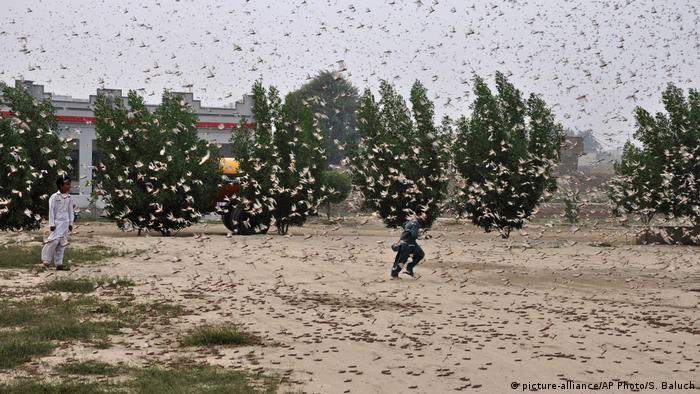 A locust swarm in Pakistan