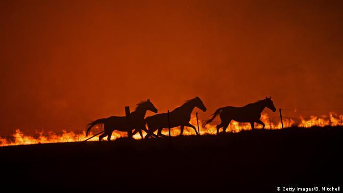 Durch die Buschbrände (hier ein Foto vom 1. Februar) wurden mehr als 12 Millionen Hektar Land verwüstet