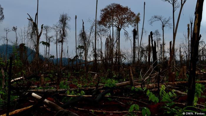 Árvores em parte derrubadas e outras de pé