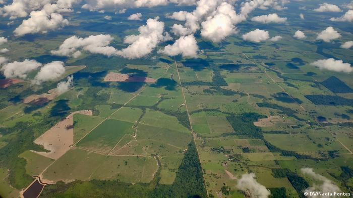 Vista aérea de plantações verdes