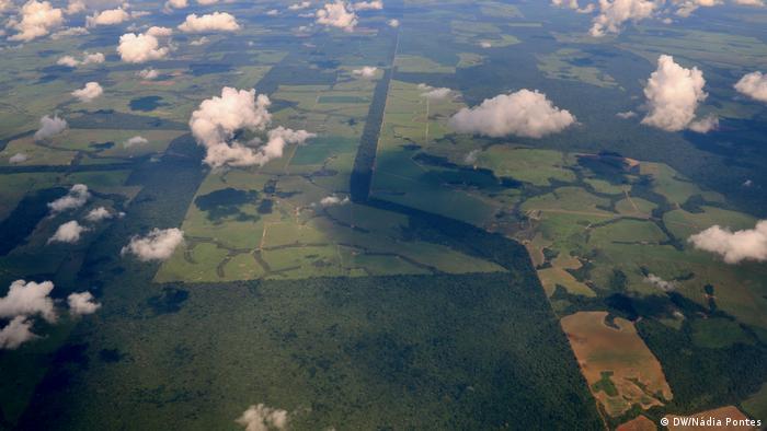 Vista aérea de plantação verde