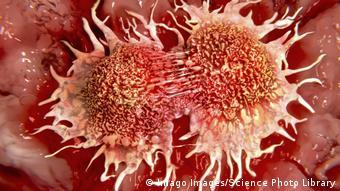 Деление раковых клеток под микроскопом