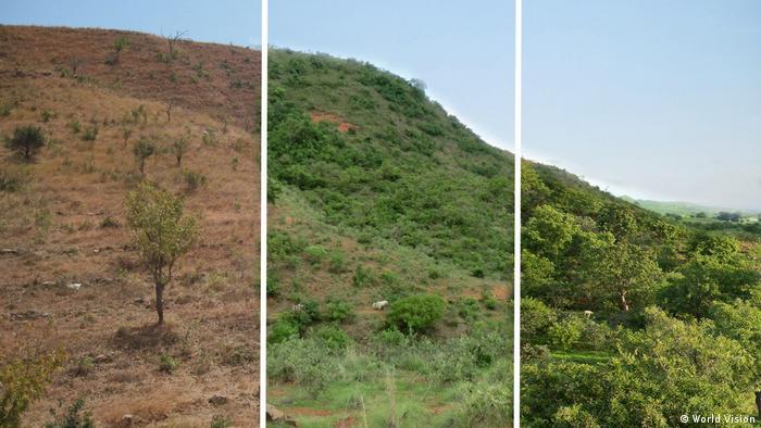 Beispiele für Wiederaufforstung nach der FMNR-Methode der Hilfsorganisation World Vision