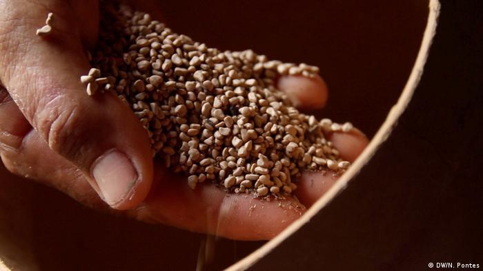 Mão segurando pequenas sementes