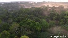 Bäume, Wald von oben