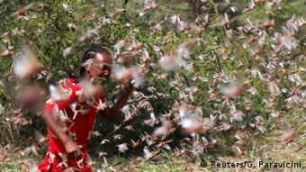 Ein Äthiopisches Mädchen versucht gegen die Heuschrecken anzukommen