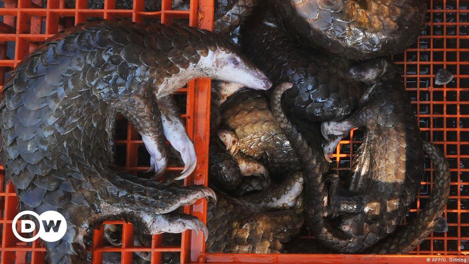 Коронаврус з Китаю: винні мсоїди