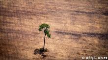 Brasilien Symbolbild illegale Brandtrodung