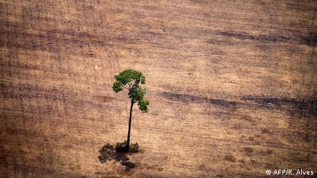 Árvore sozinha em área desmatada