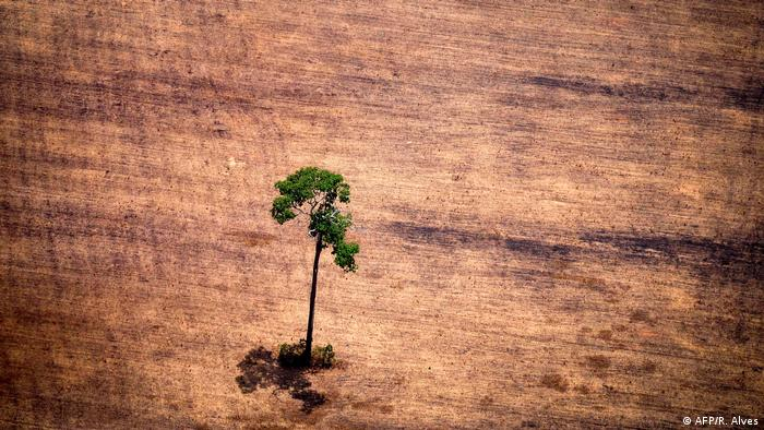 A single tree stands on an area of brown earth