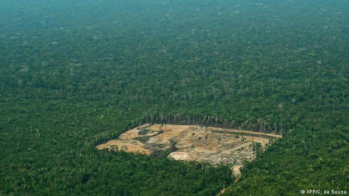Ormanlık alanın yok olduğu bölgeler arasında Amazonlar da bulunuyor