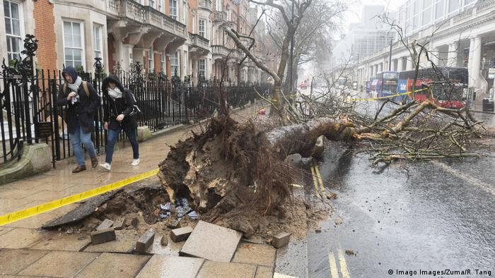 An overturned tree in London