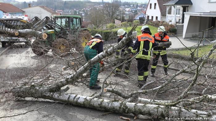 طوفان زابینه رفتوآمد خودروها در بسیاری از جادههای مهم آلمان را هم مختل کرد. ماموران آتشنشانی که در شرایط طوفانی هم به کمک نیازمندان میشتابند، در مناطق گوناگون ساعتهای متوالی در ماموریت بودند. (عکس: سقوط یک درخت توس، جادهای اصلی در ایالت راینلندفالتز را به مدت چند ساعت بست).