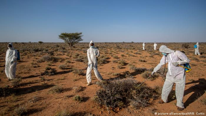 Pest-control sprayers in Somalia working in the desert to fight off locust swarms