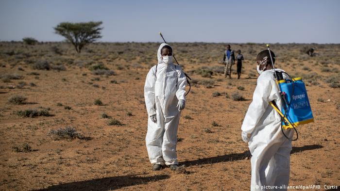 Somalia ruft Notstand aus wegen Heuschreckenplage (picture-alliance/dpa/AP/B. Curtis)