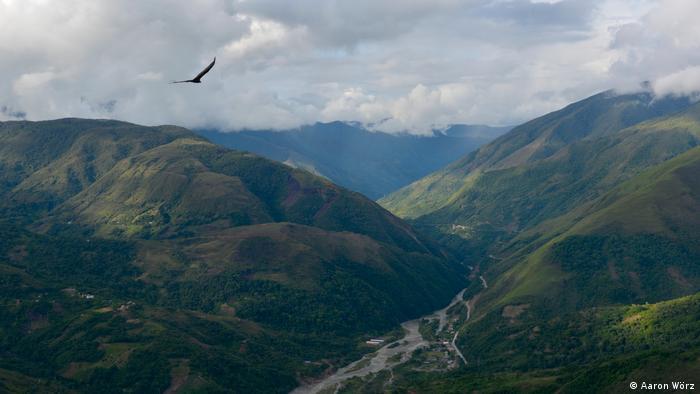 Bevor Koka lukrativer wurde, bestritten die Menschen in den Yungas mit Kaffee ihr Einkommen.