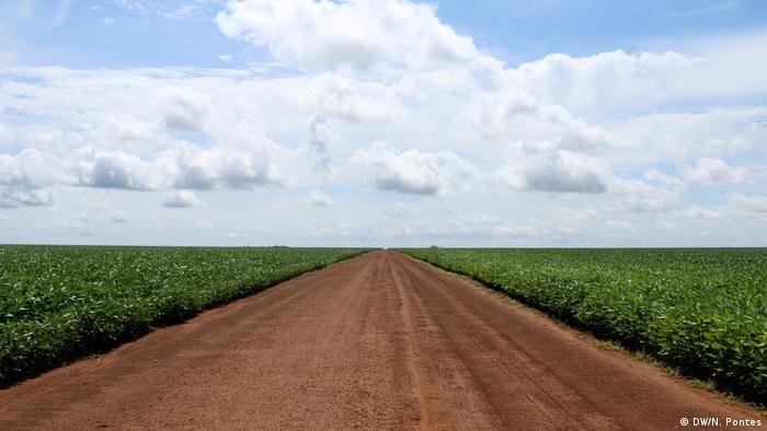 Estrada de chão vermelho corta plantação de soja