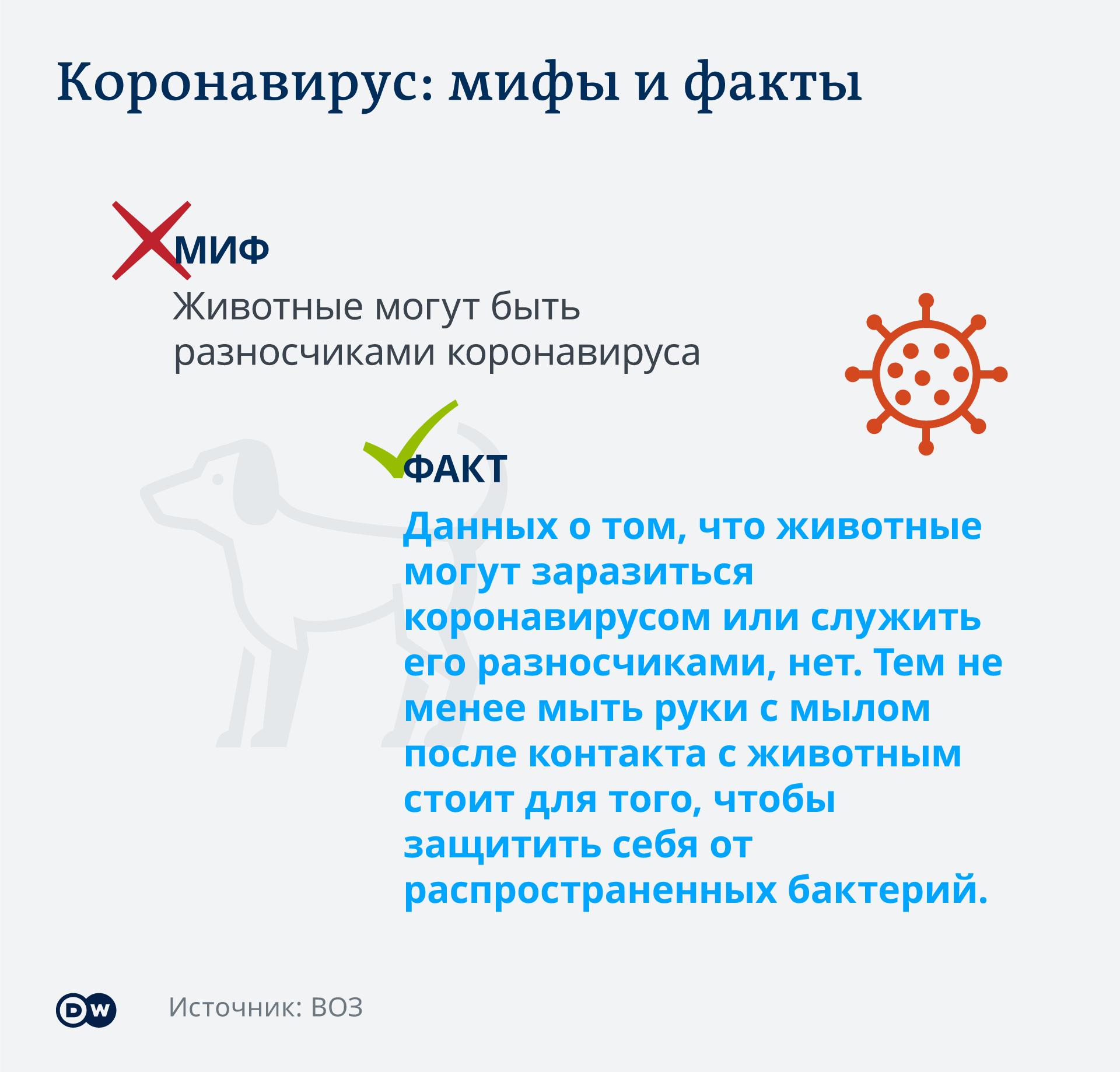 Infografik Coronavirus Mythen Tatsachen Haustiere RU