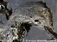 El Mar Báltico y su fauna ya se vieron afectados por una marea negra en abril de 2001.
