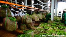 Global Ideas Bioenergie in Kenia