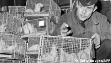 A picture taken on December 29, 1960 at Le Bourget Paris airport show a soldier holding cages of guinea pigs arriving from Reggane, southern Sahara desert, after they were exposed to the radiations of the third French nuclear test carried out in 1960, in order to establish medical treatments to fight the effects of nuclear blasts. Reggane was the site where the first French nuclear bomb was tested on February 13,1960 before the Algerian independence. France used soldiers as guinea pigs in nuclear tests in the 1960s, deliberately exposing them to radiation from atomic blasts to test the effects, according to a secret military report, obtained by AFP, revealed on February 16, 2010. AFP PHOTO FILES / AFP PHOTO / - (Photo credit should read -/AFP via Getty Images)