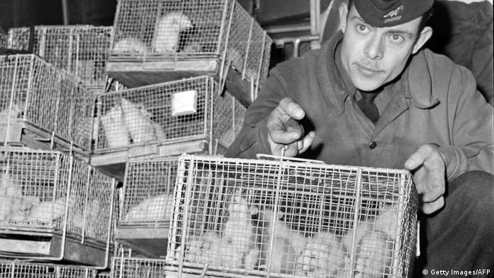 A man holding a cage of guinea pigs exposed to radiation