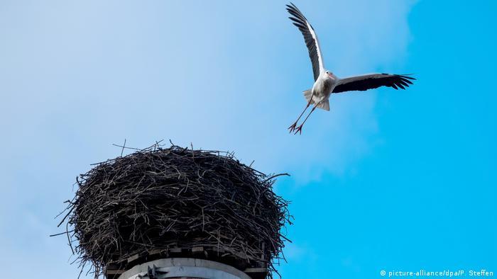 Ein Storch fliegt in ein Nest (Foto: picture-alliance/dpa/P. Steffen)