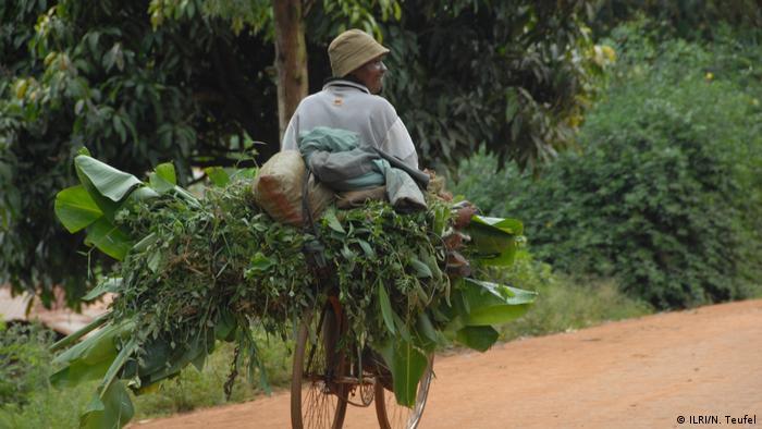 Gathering fodder in Tanzania