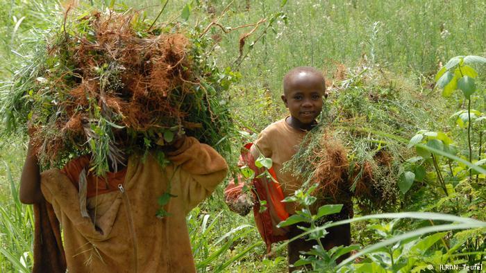 Children fetching fodder in Lushoto, Tanzania