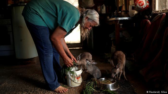 Refugio para animales víctimas de un incendio forestal