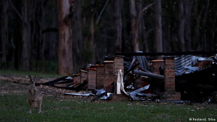 Algunos animales regresaron a visitar a sus antiguos padres adoptivos durante los incendios en Australia.