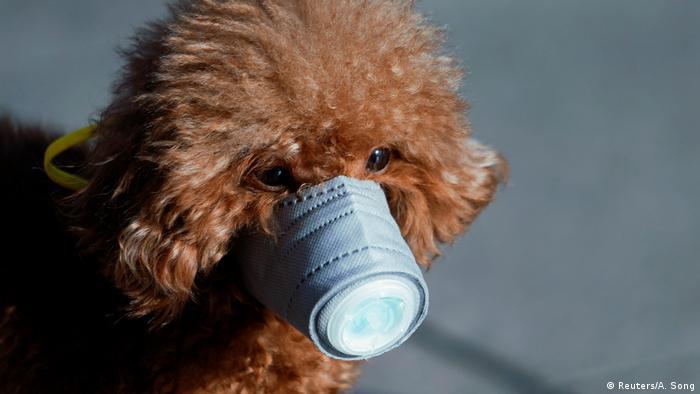 Más vale prevenir que curar. Mascota en Shanghai