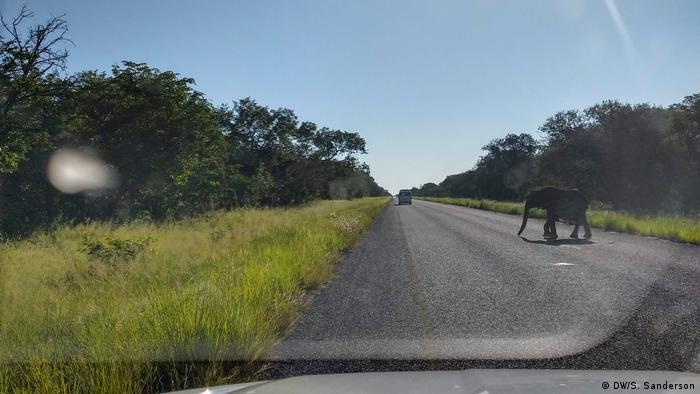 Zimbabwe | Elephants crossing the road to Victoria Falls (DW/S. Sanderson)