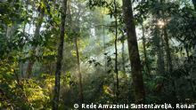 Umfassende Bewertung des Ausbreitungsmodus von Pflanzen und der Samenmerkmale in vom Menschen veränderten Wäldern des Amazonas