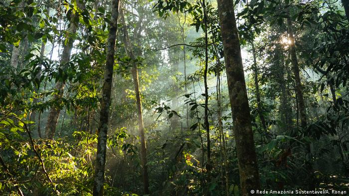 Árvores na Amazônia